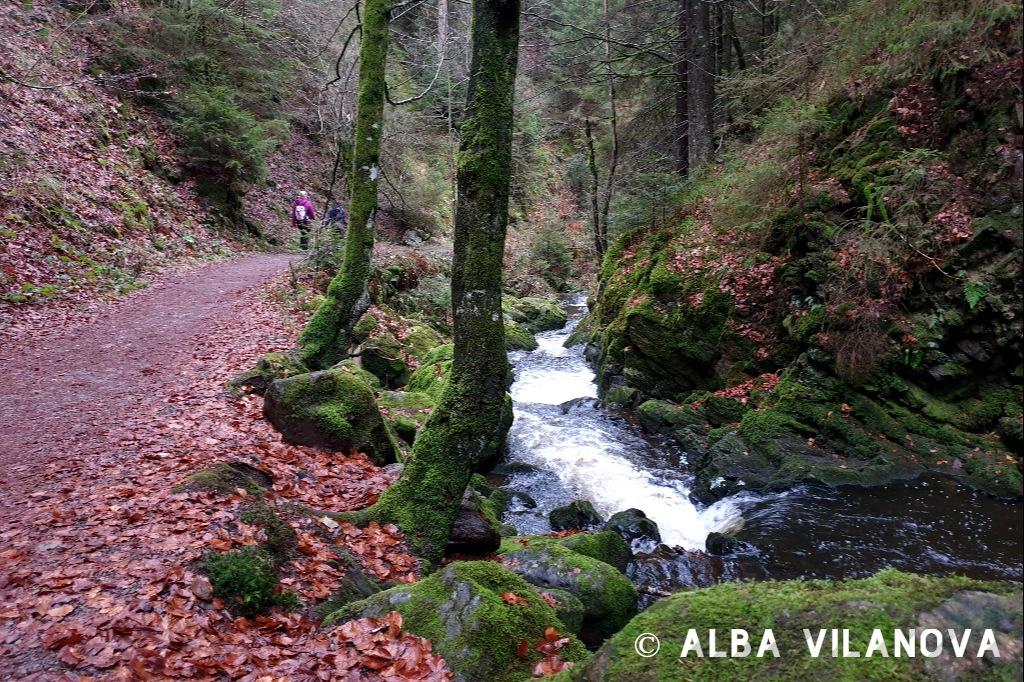 Parte del camino entre Hinterzarten y la barranca de Ravenna - Alemania - Viajar - Blog de Alba Vilanova