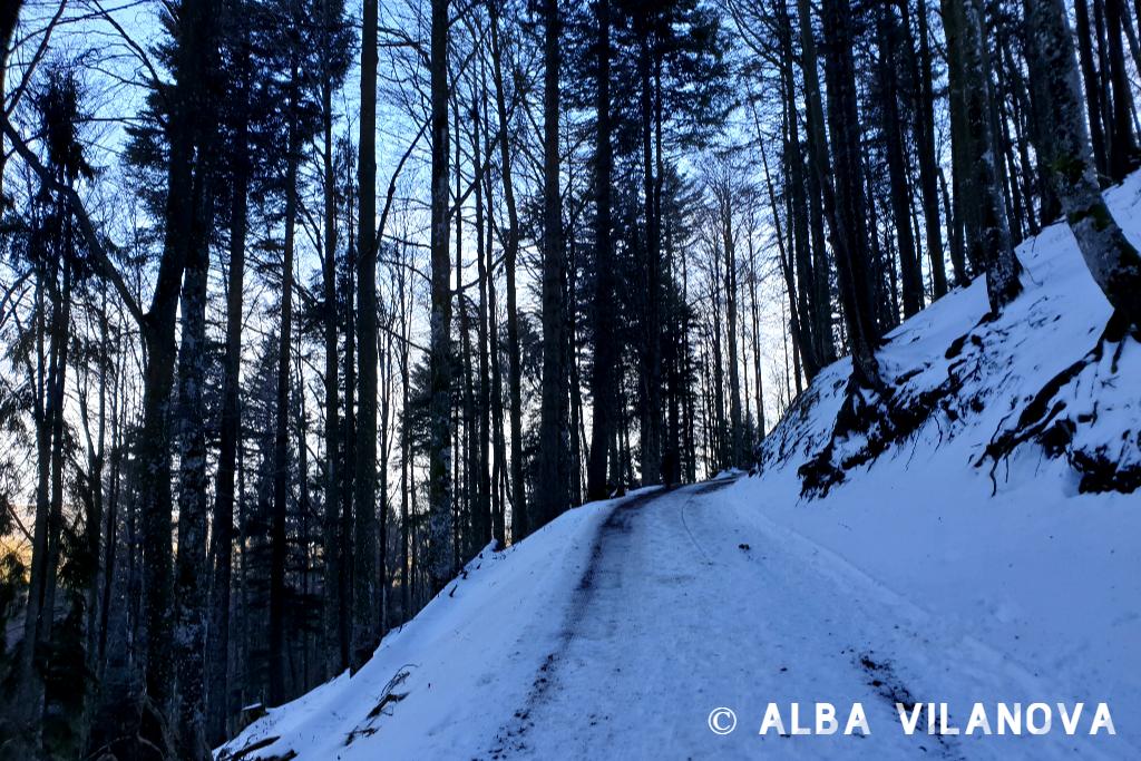 De camino a la parada Caritas-Haus desde el lago Feldsee - Alemania - Viajar - Blog de Alba Vilanova